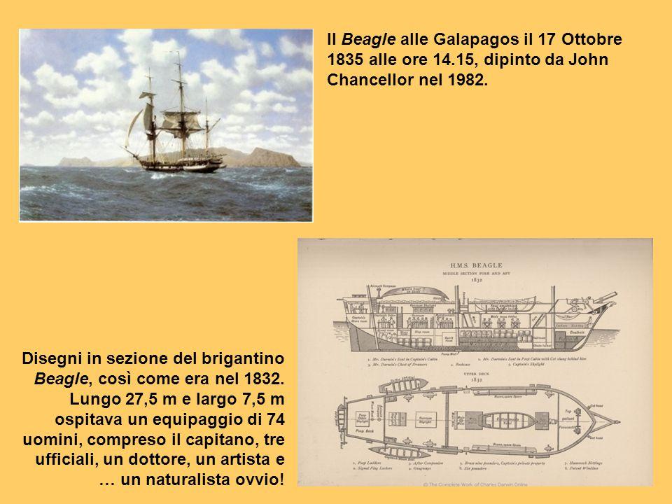 Il Beagle alle Galapagos il 17 Ottobre 1835 alle ore 14.15, dipinto da John Chancellor nel 1982. Disegni in sezione del brigantino Beagle, così come e
