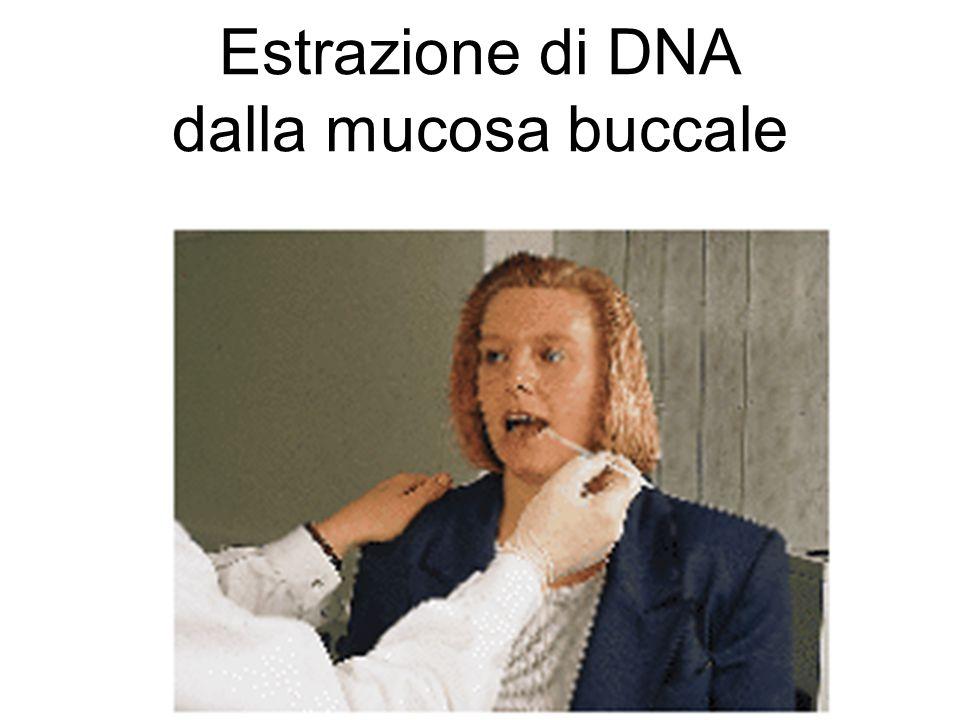 Estrazione di DNA dalla mucosa buccale