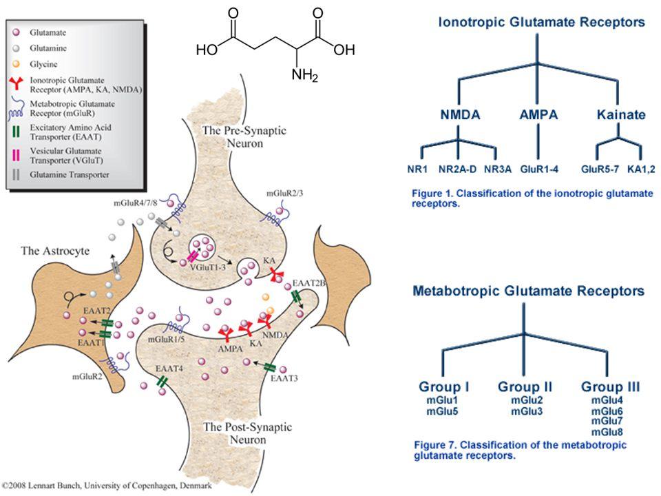 IL SISTEMA AUTONOMO (VEGETATIVO) Regolazione omeostatica dell'organismo (riposo o azione) Muscolo liscio, cardiaco, ghiandole