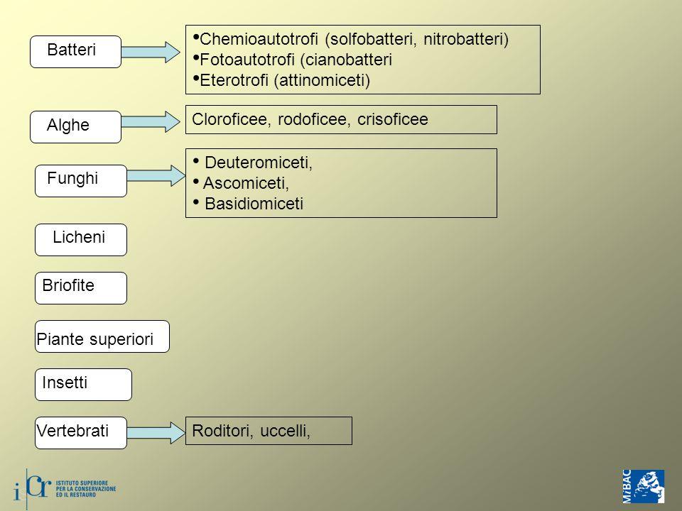 Batteri Chemioautotrofi (solfobatteri, nitrobatteri) Fotoautotrofi (cianobatteri Eterotrofi (attinomiceti) Alghe Cloroficee, rodoficee, crisoficee Funghi Deuteromiceti, Ascomiceti, Basidiomiceti Licheni Briofite Piante superiori Insetti Vertebrati Roditori, uccelli,