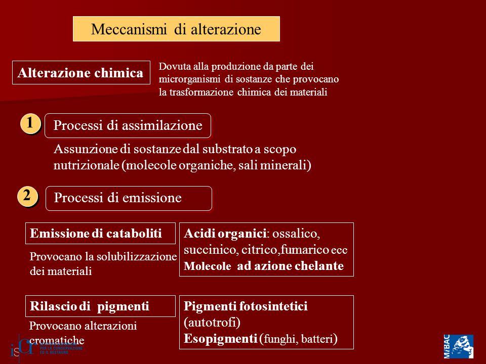 Meccanismi di alterazione Alterazione chimica Dovuta alla produzione da parte dei microrganismi di sostanze che provocano la trasformazione chimica de