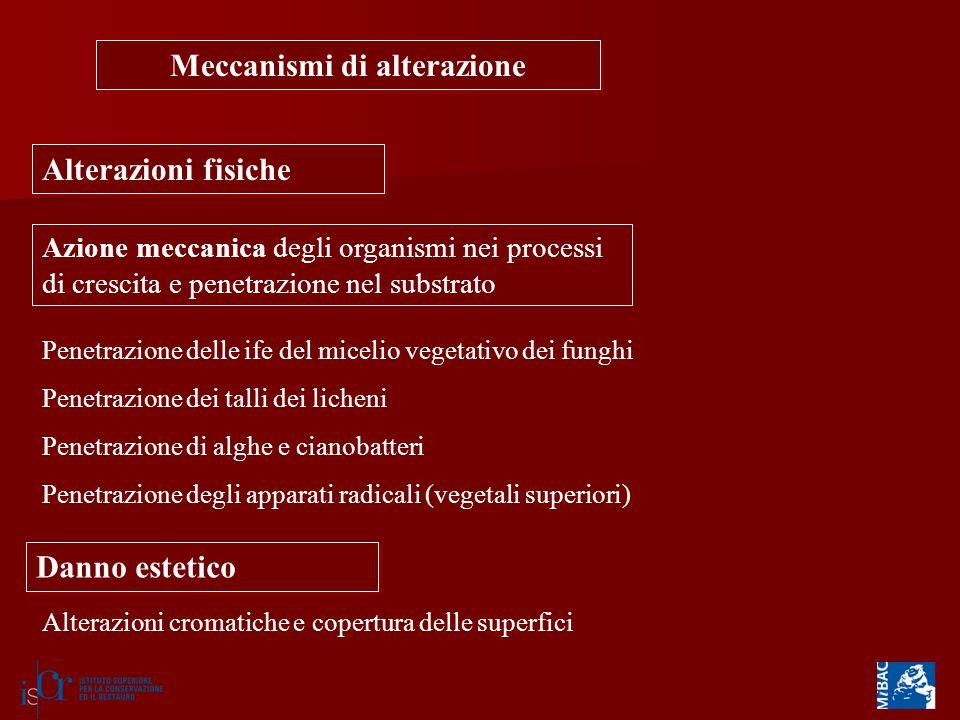 Meccanismi di alterazione Alterazioni fisiche Azione meccanica degli organismi nei processi di crescita e penetrazione nel substrato Penetrazione dell