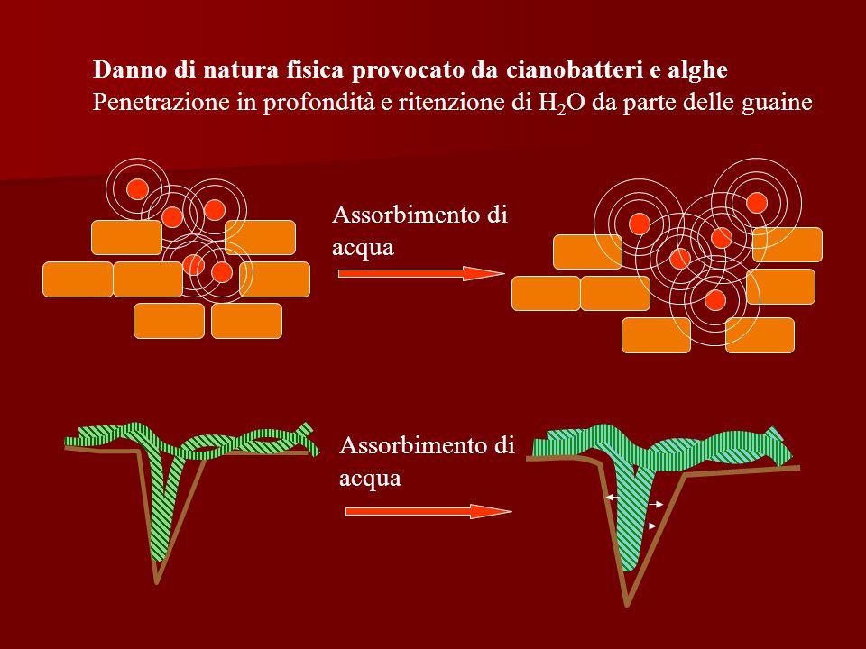 Assorbimento di acqua Danno di natura fisica provocato da cianobatteri e alghe Penetrazione in profondità e ritenzione di H 2 O da parte delle guaine Assorbimento di acqua