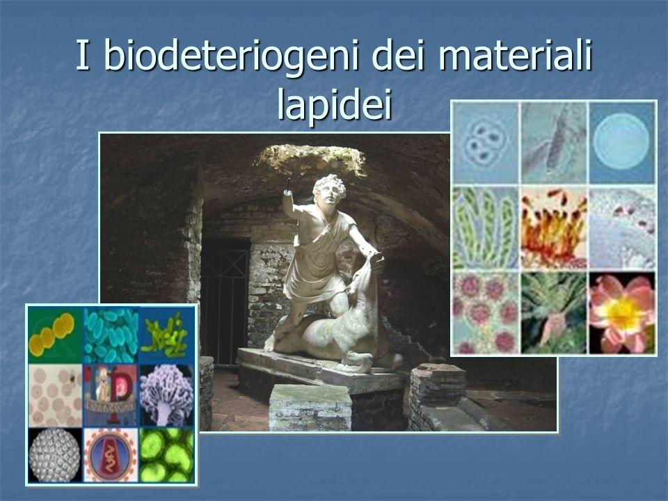 I biodeteriogeni dei materiali lapidei
