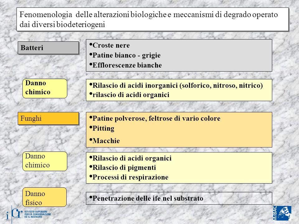 Fenomenologia delle alterazioni biologiche e meccanismi di degrado operato dai diversi biodeteriogeni Batteri Croste nere Patine bianco - grigie Efflorescenze bianche Danno chimico Rilascio di acidi inorganici (solforico, nitroso, nitrico) rilascio di acidi organici Danno fisico Funghi Patine polverose, feltrose di vario colore Pitting Macchie Rilascio di acidi organici Rilascio di pigmenti Processi di respirazione Penetrazione delle ife nel substrato Danno chimico