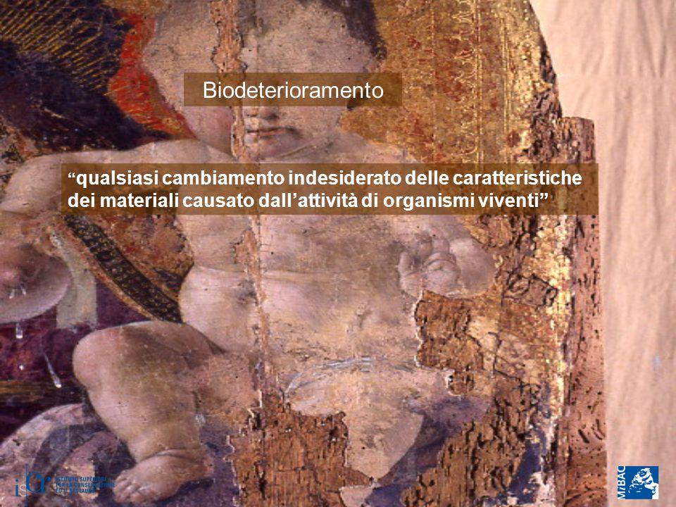 """Biodeterioramento """" qualsiasi cambiamento indesiderato delle caratteristiche dei materiali causato dall'attività di organismi viventi"""""""