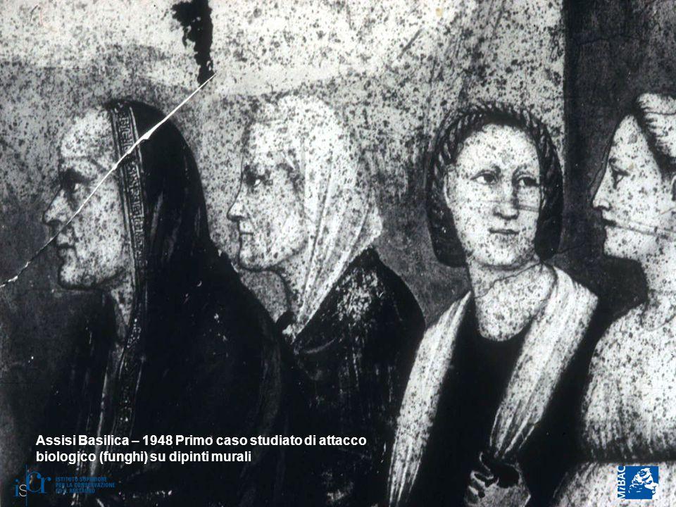 Assisi Basilica – 1948 Primo caso studiato di attacco biologico (funghi) su dipinti murali