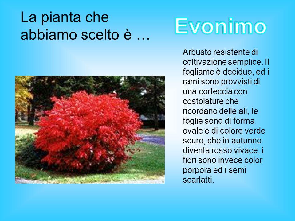 La pianta che abbiamo scelto è … Arbusto resistente di coltivazione semplice.