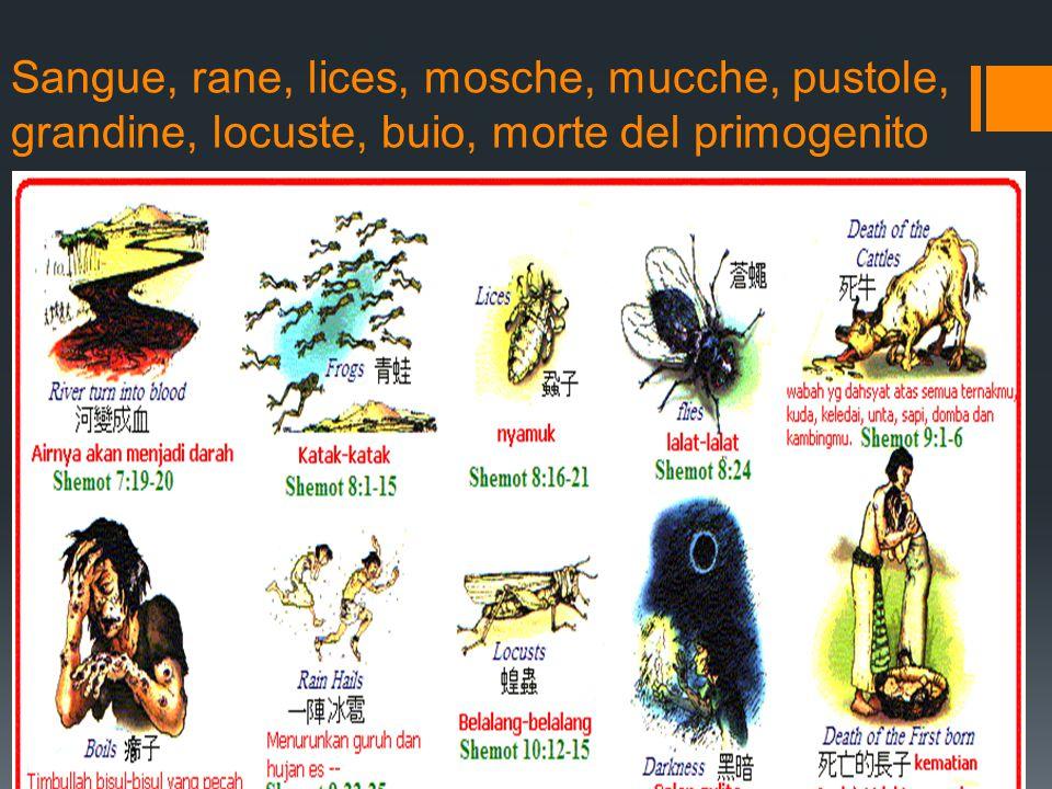 Sangue, rane, lices, mosche, mucche, pustole, grandine, locuste, buio, morte del primogenito