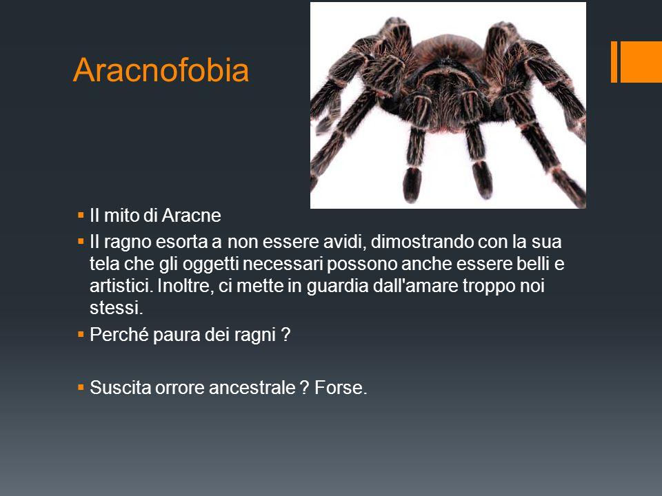 Aracnofobia  Il mito di Aracne  Il ragno esorta a non essere avidi, dimostrando con la sua tela che gli oggetti necessari possono anche essere belli