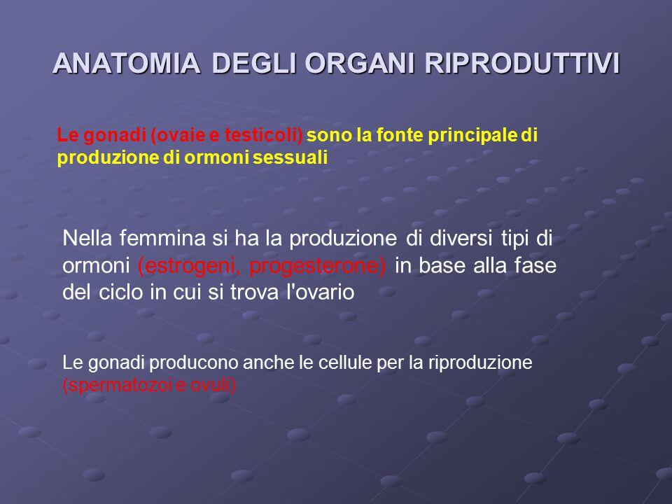 ANATOMIA DEGLI ORGANI RIPRODUTTIVI Le gonadi (ovaie e testicoli) sono la fonte principale di produzione di ormoni sessuali Nella femmina si ha la produzione di diversi tipi di ormoni (estrogeni, progesterone) in base alla fase del ciclo in cui si trova l ovario Le gonadi producono anche le cellule per la riproduzione (spermatozoi e ovuli)