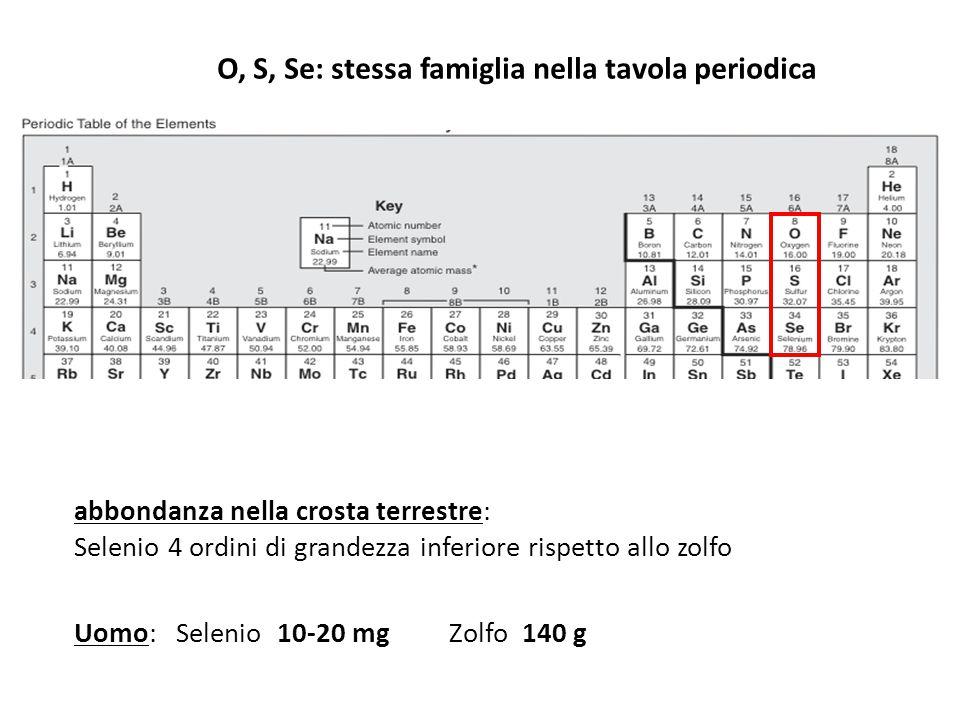 abbondanza nella crosta terrestre: Selenio 4 ordini di grandezza inferiore rispetto allo zolfo Uomo: Selenio 10-20 mg Zolfo 140 g O, S, Se: stessa fam