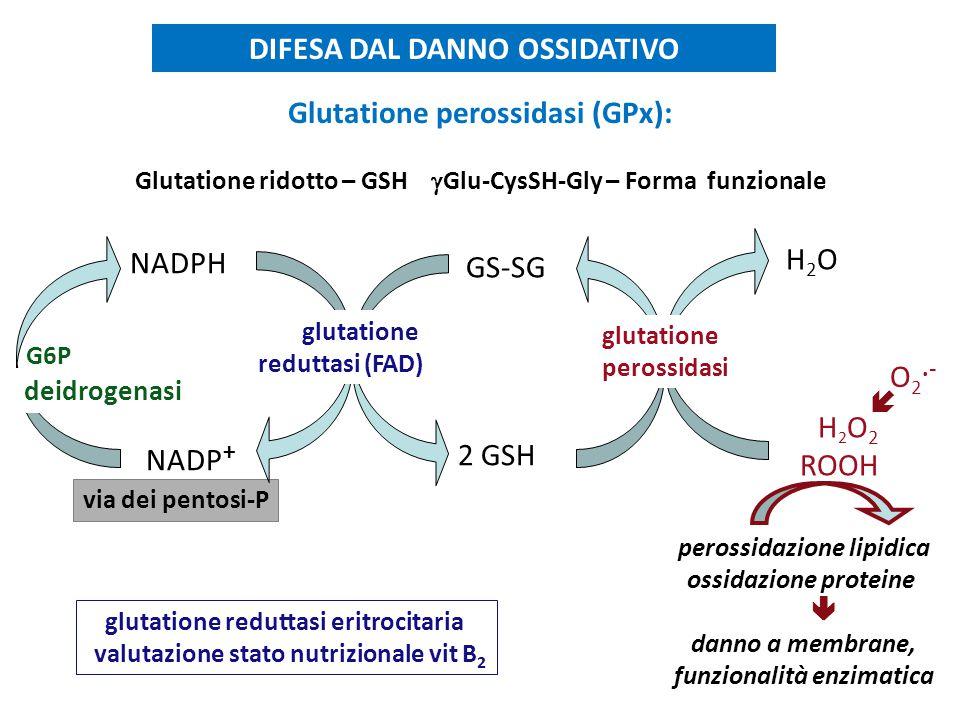 Glutatione perossidasi (GPx): Glutatione ridotto – GSH  Glu-CysSH-Gly – Forma funzionale DIFESA DAL DANNO OSSIDATIVO glutatione reduttasi eritrocitar