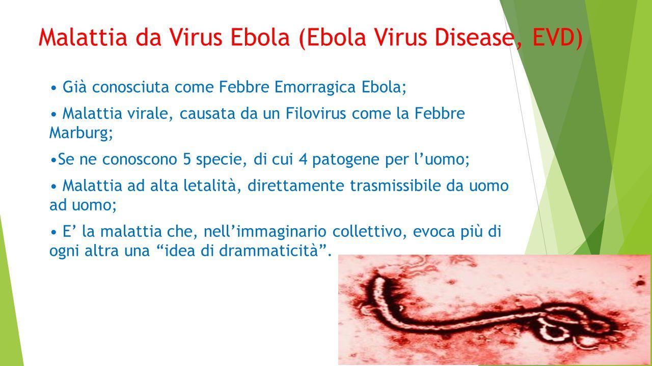 Malattia da Virus Ebola (Ebola Virus Disease, EVD) Già conosciuta come Febbre Emorragica Ebola; Malattia virale, causata da un Filovirus come la Febbre Marburg; Se ne conoscono 5 specie, di cui 4 patogene per l'uomo; Malattia ad alta letalità, direttamente trasmissibile da uomo ad uomo; E' la malattia che, nell'immaginario collettivo, evoca più di ogni altra una idea di drammaticità .