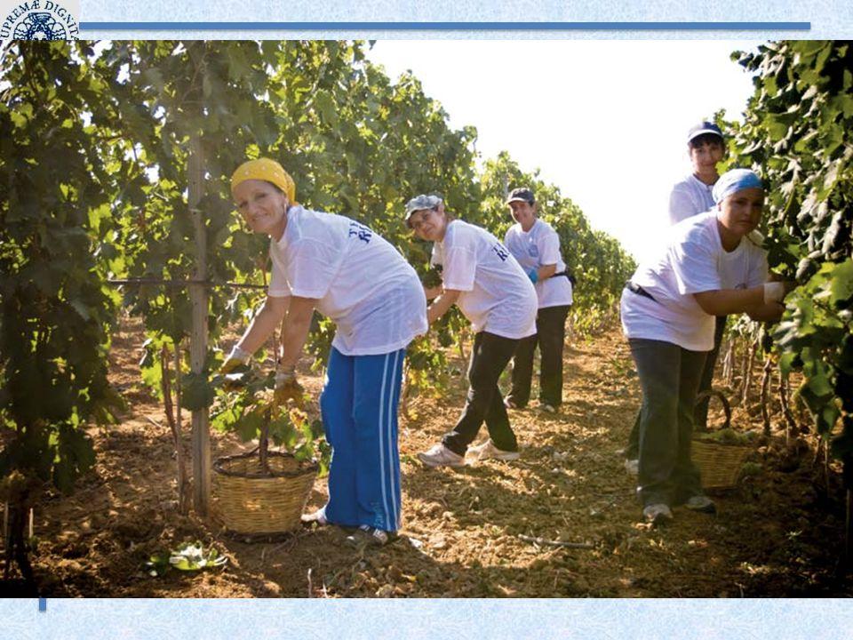 Azienda Agricola Lischeto 5 Negli anni successivi, coerentemente con il percorso di sviluppo seguito, ristruttura anche un vecchio casolare aziendale iniziando l attività agrituristica, tuttora condotta con molto successo.