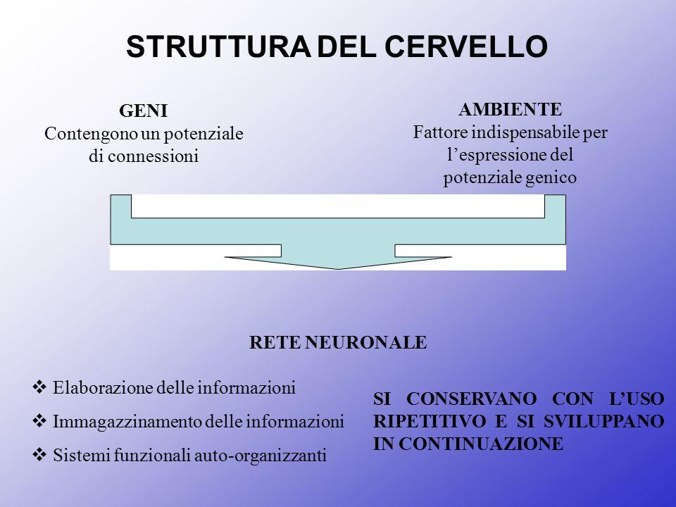 STRUTTURA DEL CERVELLO GENI Contengono un potenziale di connessioni AMBIENTE Fattore indispensabile per l'espressione del potenziale genico RETE NEURO