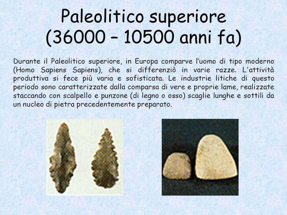 Paleolitico superiore (36000 – 10500 anni fa) Durante il Paleolitico superiore, in Europa comparve l'uomo di tipo moderno (Homo Sapiens Sapiens), che