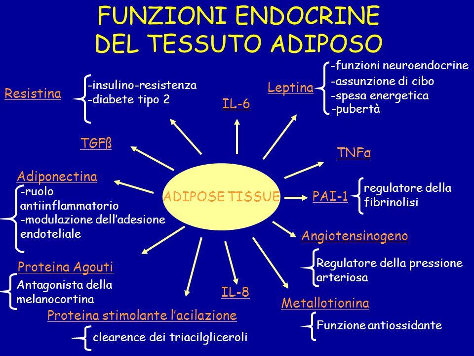 ADIPOSE TISSUE FUNZIONI ENDOCRINE DEL TESSUTO ADIPOSO Leptina -funzioni neuroendocrine -assunzione di cibo -spesa energetica Angiotensinogeno -pubertà Adiponectina Funzione antiossidante Metallotionina PAI-1 regulatore della fibrinolisi -ruolo antiinflammatorio -modulazione dell'adesione endoteliale Proteina Agouti Antagonista della melanocortina Resistina -insulino-resistenza -diabete tipo 2 Regulatore della pressione arteriosa TGFß TNFα IL-6 Proteina stimolante l'acilazione IL-8 clearence dei triacilgliceroli