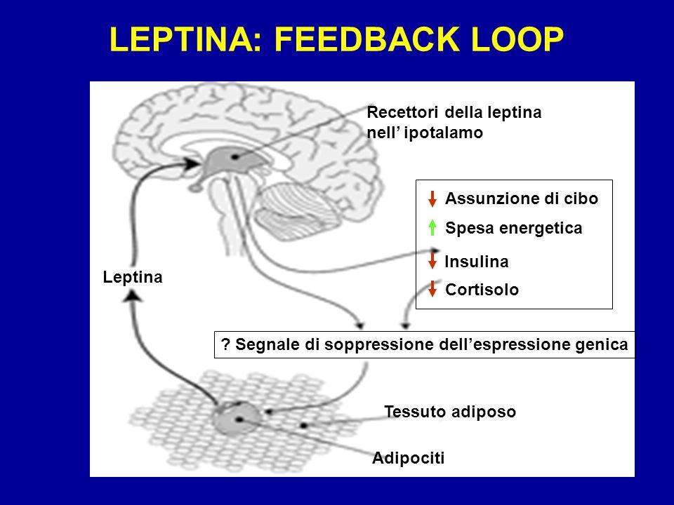 LEPTINA: FEEDBACK LOOP Leptina Recettori della leptina nell' ipotalamo Tessuto adiposo Adipociti .