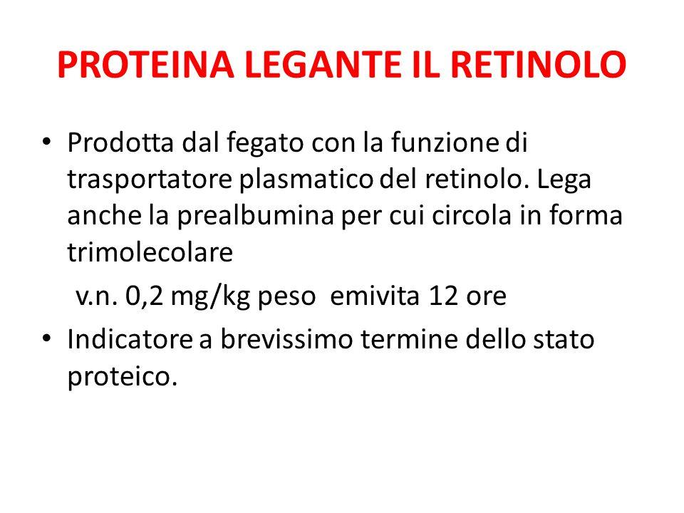 PROTEINA LEGANTE IL RETINOLO Prodotta dal fegato con la funzione di trasportatore plasmatico del retinolo. Lega anche la prealbumina per cui circola i