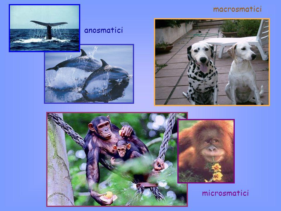 anosmatici microsmatici macrosmatici