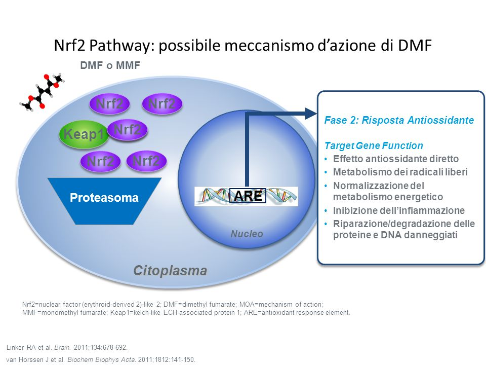 Nrf2 Pathway: possibile meccanismo d'azione di DMF Nrf2=nuclear factor (erythroid-derived 2)-like 2; DMF=dimethyl fumarate; MOA=mechanism of action; M