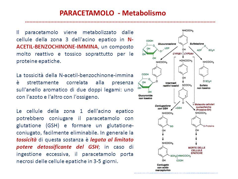 PARACETAMOLO - Metabolismo Il paracetamolo viene metabolizzato dalle cellule della zona 3 dell'acino epatico in N- ACETIL-BENZOCHINONE-IMMINA, un comp