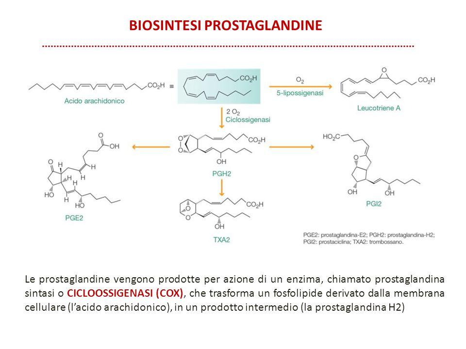 BIOSINTESI PROSTAGLANDINE Le prostaglandine vengono prodotte per azione di un enzima, chiamato prostaglandina sintasi o CICLOOSSIGENASI (COX), che tra