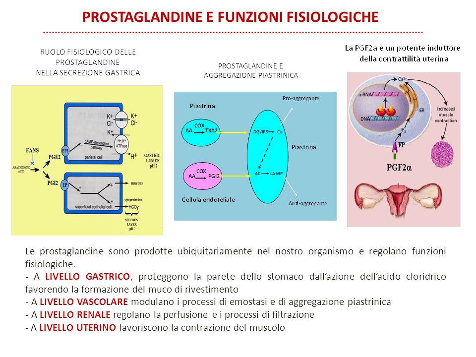 Le prostaglandine sono prodotte ubiquitariamente nel nostro organismo e regolano funzioni fisiologiche. - A LIVELLO GASTRICO, proteggono la parete del