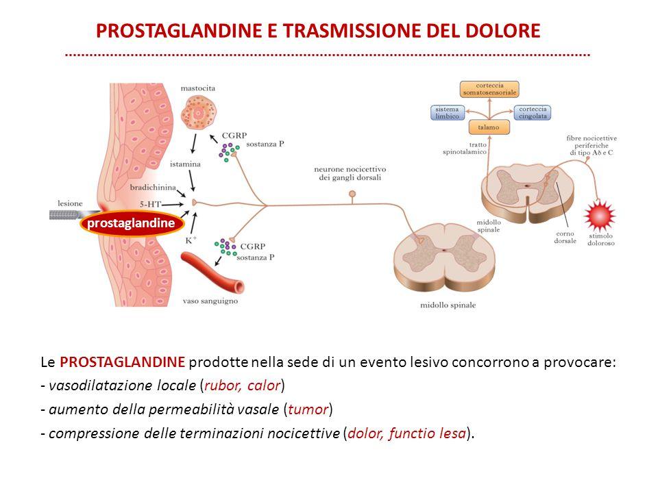 PROSTAGLANDINE E TRASMISSIONE DEL DOLORE Le PROSTAGLANDINE prodotte nella sede di un evento lesivo concorrono a provocare: - vasodilatazione locale (r