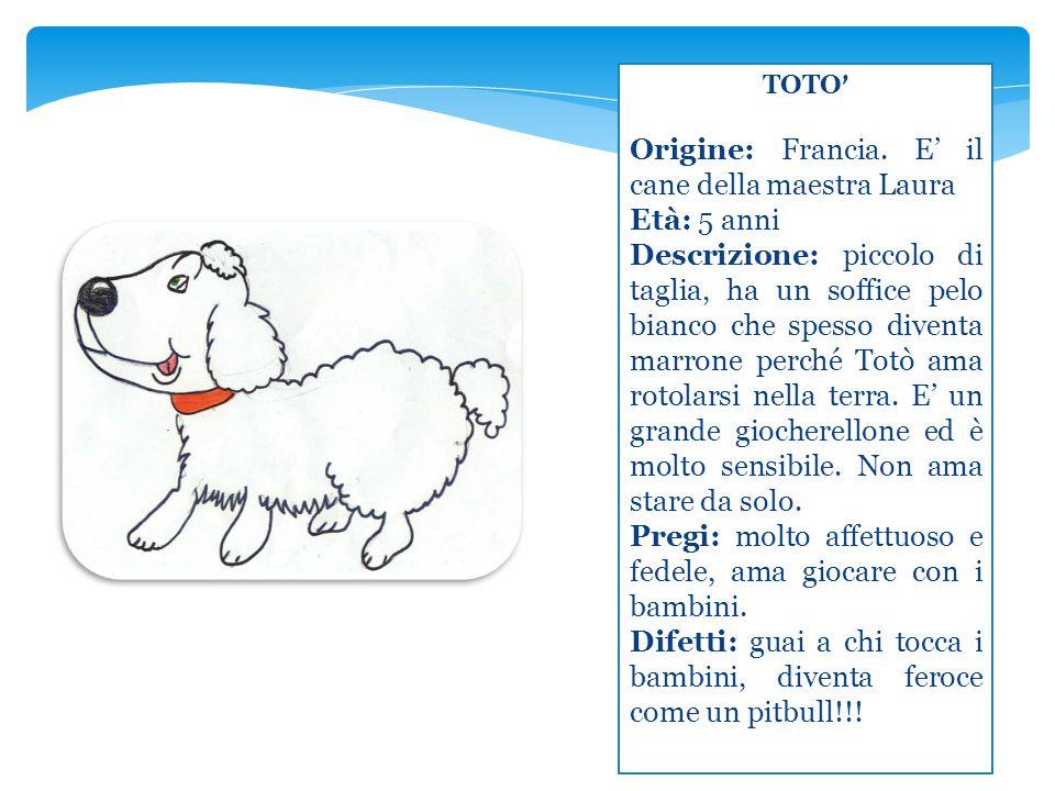 TOTO ' Origine: Francia. E' il cane della maestra Laura Età: 5 anni Descrizione: piccolo di taglia, ha un soffice pelo bianco che spesso diventa marro