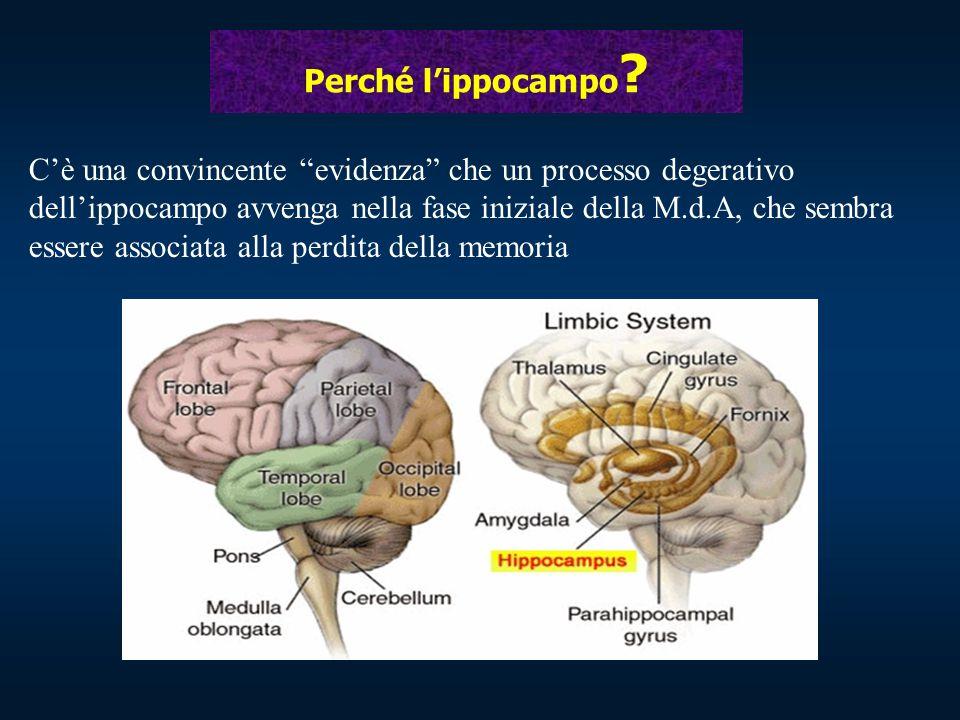 """Perché l'ippocampo ? C'è una convincente """"evidenza"""" che un processo degerativo dell'ippocampo avvenga nella fase iniziale della M.d.A, che sembra esse"""