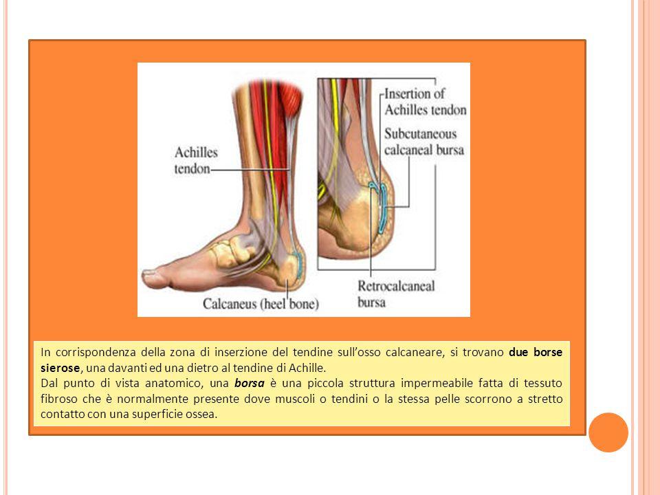 C ONCLUSIONE La lesione del tendine d'Achille, che in passato era un evento molto raro, negli ultimi decenni è divenuta di osservazione sempre più frequente.