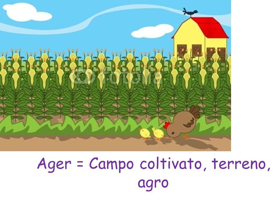Campus = Campo, Campagna