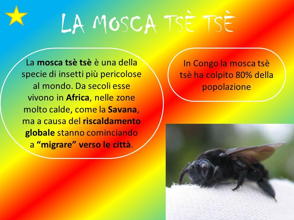 LA MOSCA TSÈ TSÈ In Congo la mosca tsè tsè ha colpito 80% della popolazione La mosca tsè tsè è una della specie di insetti più pericolose al mondo.