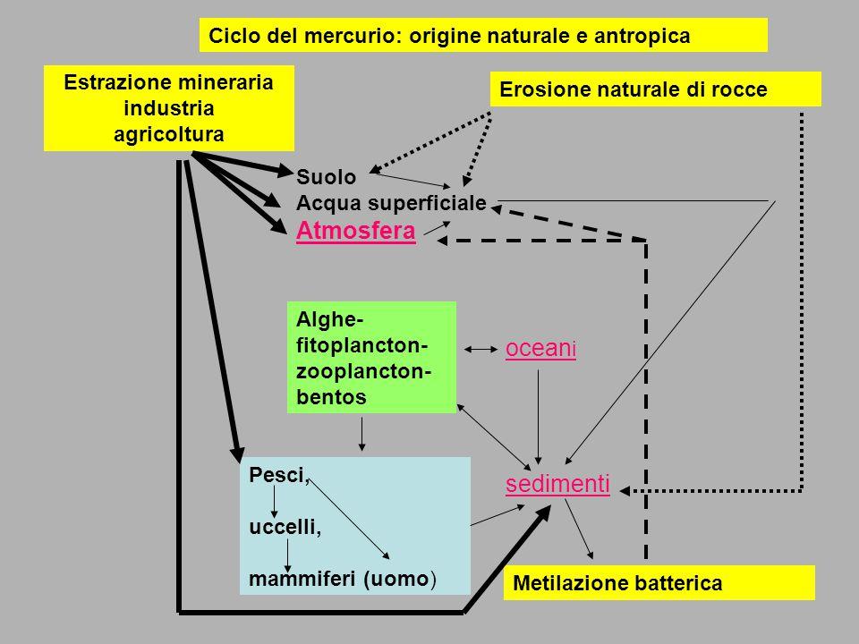 Ciclo del mercurio: origine naturale e antropica Estrazione mineraria industria agricoltura Erosione naturale di rocce Suolo Acqua superficiale Atmosfera Alghe- fitoplancton- zooplancton- bentos Pesci, uccelli, mammiferi (uomo) ocean i sedimenti Metilazione batterica
