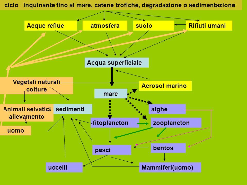 ciclo inquinante fino al mare, catene trofiche, degradazione o sedimentazione suolo Acqua superficiale atmosfera mare fitoplanctonzooplancton alghe be