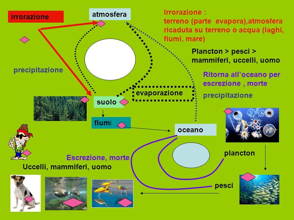 irrorazione suolo atmosfera evaporazione precipitazione oceano fiumi plancton pesci Uccelli, mammiferi, uomo Escrezione, morte precipitazione Irrorazi