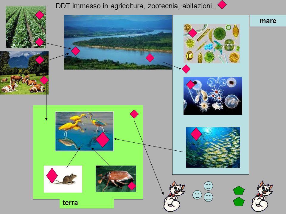 mare terra DDT immesso in agricoltura, zootecnia, abitazioni..