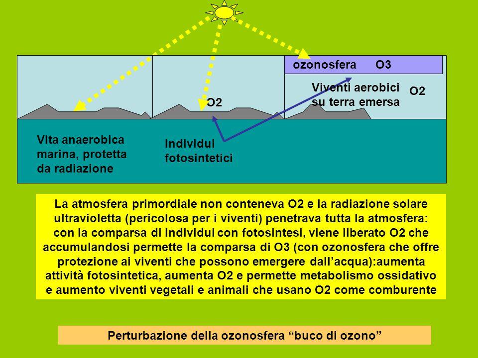 Vita anaerobica marina, protetta da radiazione Individui fotosintetici O2 ozonosfera Viventi aerobici su terra emersa La atmosfera primordiale non conteneva O2 e la radiazione solare ultravioletta (pericolosa per i viventi) penetrava tutta la atmosfera: con la comparsa di individui con fotosintesi, viene liberato O2 che accumulandosi permette la comparsa di O3 (con ozonosfera che offre protezione ai viventi che possono emergere dall'acqua):aumenta attività fotosintetica, aumenta O2 e permette metabolismo ossidativo e aumento viventi vegetali e animali che usano O2 come comburente O3 O2 Perturbazione della ozonosfera buco di ozono