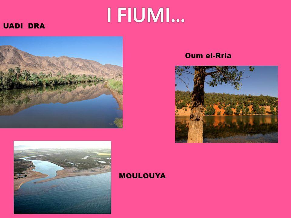 UADI DRA Oum el-Rria MOULOUYA