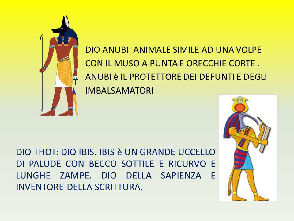DIO ANUBI: ANIMALE SIMILE AD UNA VOLPE CON IL MUSO A PUNTA E ORECCHIE CORTE. ANUBI è IL PROTETTORE DEI DEFUNTI E DEGLI IMBALSAMATORI DIO THOT: DIO IBI