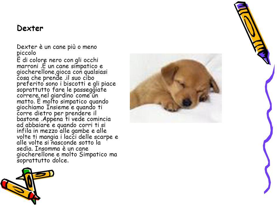 Dexter Dexter è un cane più o meno piccolo È di colore nero con gli occhi marroni.È un cane simpatico e giocherellone,gioca con qualsiasi cosa che pre
