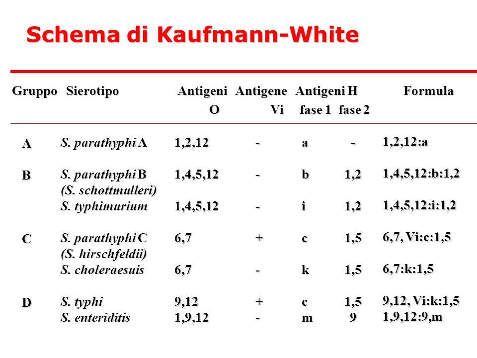Schema di Kaufmann-White Gruppo Sierotipo Antigeni Antigene Antigeni H Formula O Vi fase 1 fase 2 O Vi fase 1 fase 2 ABCD S.