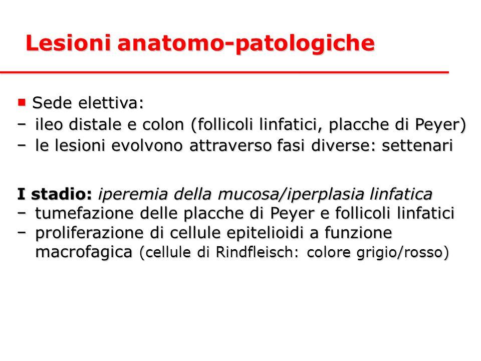 Lesioni anatomo-patologiche ■ Sede elettiva: −ileo distale e colon (follicoli linfatici, placche di Peyer) −le lesioni evolvono attraverso fasi divers
