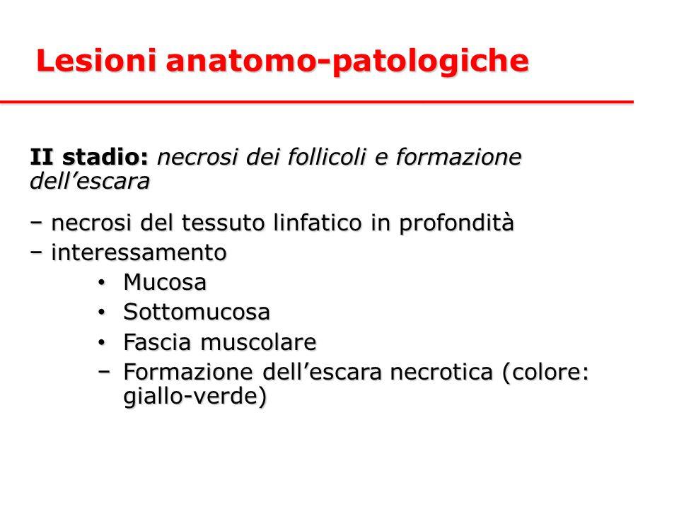 II stadio: necrosi dei follicoli e formazione dell'escara − necrosi del tessuto linfatico in profondità − interessamento Mucosa Mucosa Sottomucosa Sottomucosa Fascia muscolare Fascia muscolare −Formazione dell'escara necrotica (colore: giallo-verde) Lesioni anatomo-patologiche