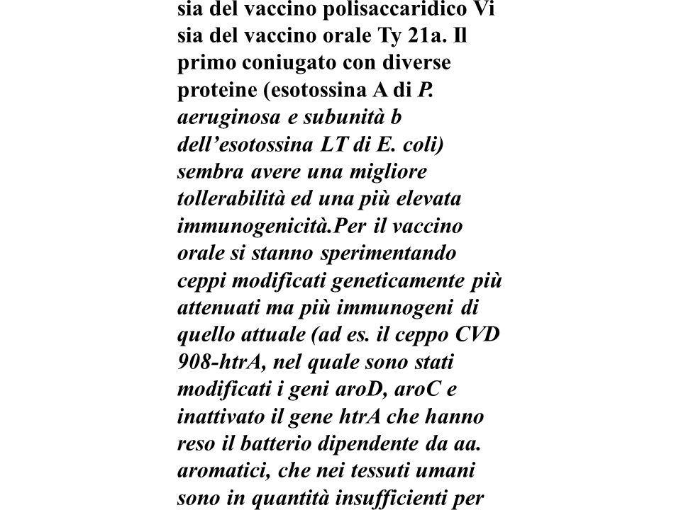 Nuovi vaccini...Sono in fase di sperimentazione nuovi vaccini al fine di ottenere una più elevata efficacia e risposta immunitaria sia del vaccino polisaccaridico Vi sia del vaccino orale Ty 21a.