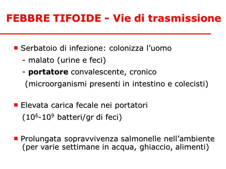 FEBBRE TIFOIDE - Vie di trasmissione ■ Serbatoio di infezione: colonizza l'uomo - malato (urine e feci) - portatore convalescente, cronico (microorgan