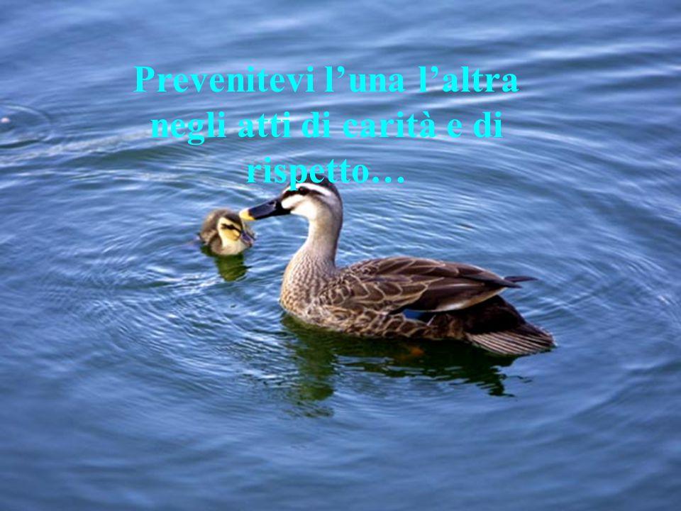 Prevenitevi l'una l'altra negli atti di carità e di rispetto…