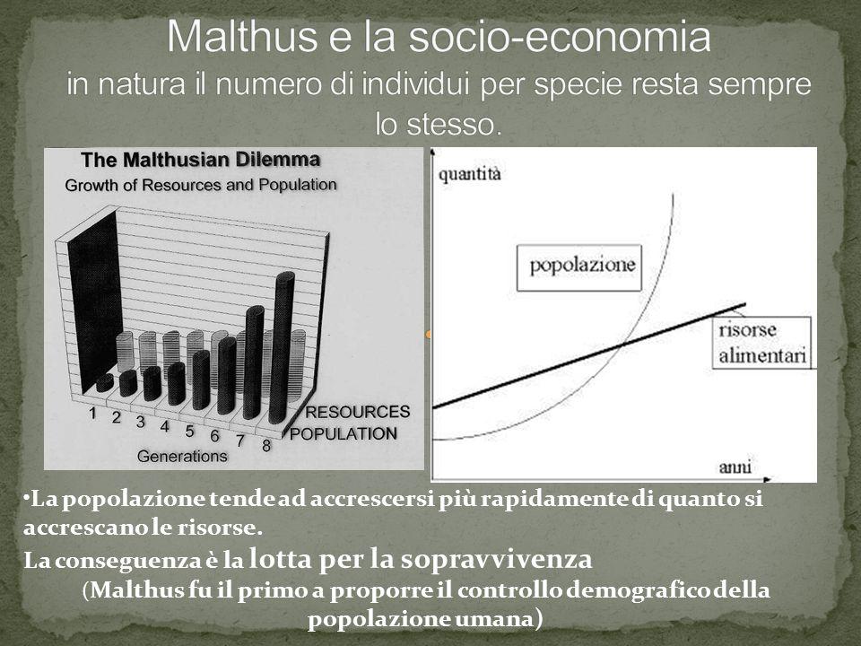 La popolazione tende ad accrescersi più rapidamente di quanto si accrescano le risorse. La conseguenza è la lotta per la sopravvivenza ( Malthus fu il
